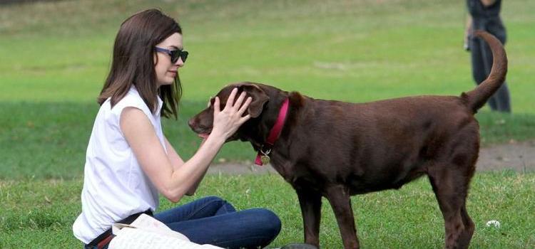 犬冠状病毒怎么引起的 说到底还是那些护理问题