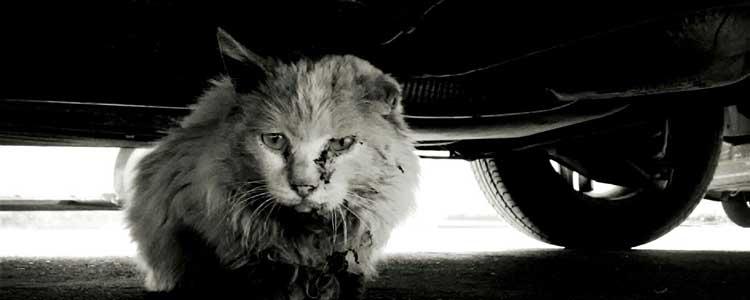 为什么猫喜欢躲发动机里 直接开启会跑出来吗?