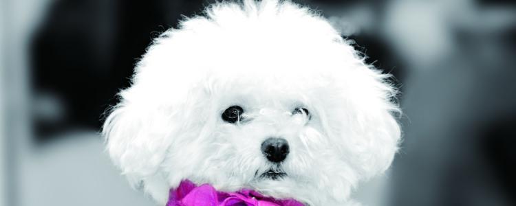狗发情可以吃驱虫药 发情期还给狗狗驱虫,不要命了吗