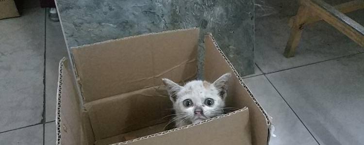 猫为什么喜欢纸盒子? 盒子才是猫咪的真爱啊!
