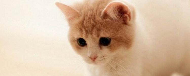 被小奶猫抓伤渗了一点点血 如何处理伤口?