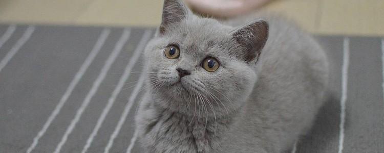 猫可以寄养吗 在寄养之前这些你都考虑到了吗