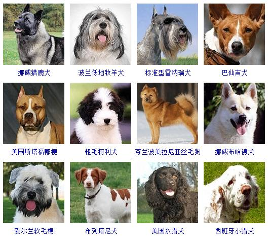 军犬品种幽灵犬图片_犬品种_中小型犬品种大全 狗狗