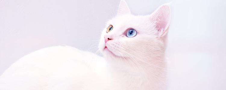 被小奶猫猫咬了针眼大小的伤口 如何正确应对处理