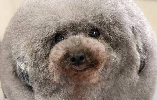 狗狗晚上睡觉要盖毯子吗 你太轻视狗狗的身体素质了!插图(1)