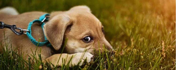 狗狗喜欢在家里吠叫怎么办 要做好这两点!