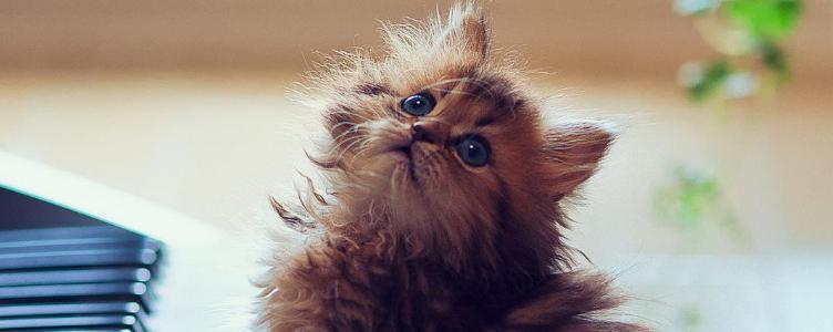 被小奶猫挠了用打狂犬疫苗吗 不用小题大做!
