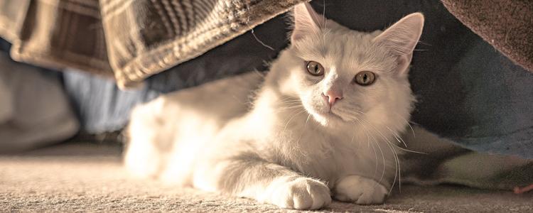 冬天猫身上有静电 不做炸毛小公举