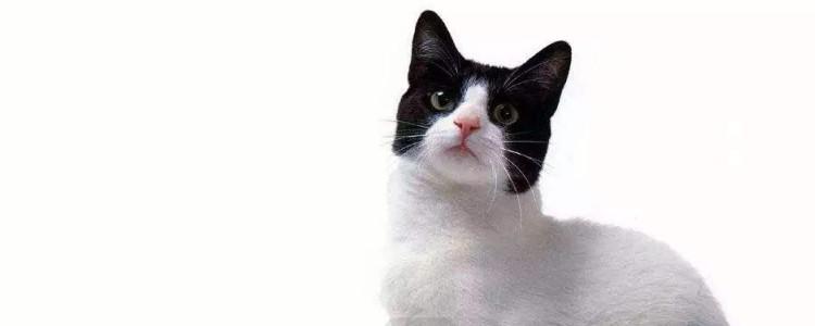 猫多大可以做绝育 最佳的绝育时间记住了吗?