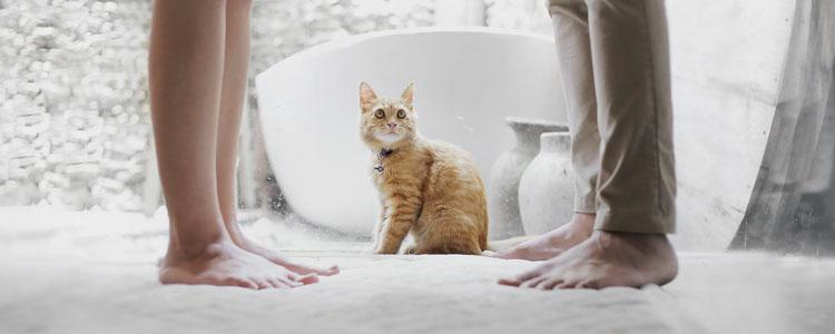猫冬天掉毛是什么原因 不掉毛怎么长出裘大衣?