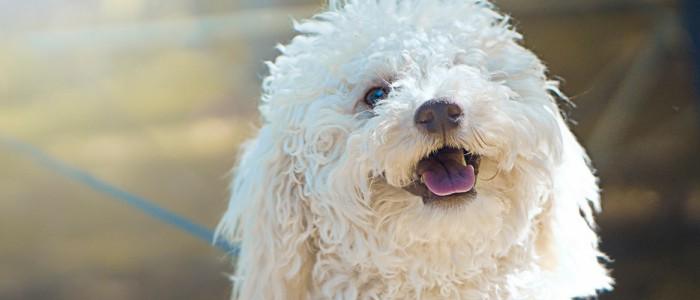 狗肾衰症状 要多注意狗狗身体哦!