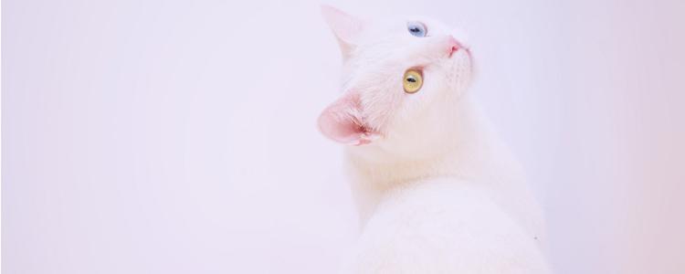 猫冬天绝育好还是夏天绝育好 要做什么术前准备?
