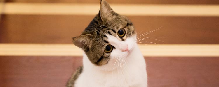 猫呕吐三天不吃 猫呕吐什么程度该去看医生?