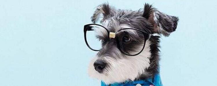 狗狗冬季生产注意什么 生产过程中需要注意的你都了解了吗