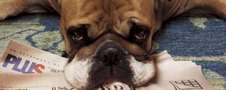 老年犬要吃什么好? 犬主须知老年犬的饮食问题