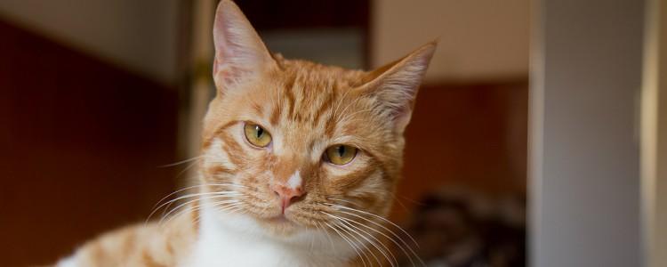 猫带铃铛有什么影响吗 影响绝对不止一点点!