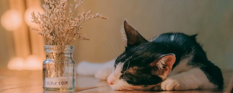 猫冬天体温多少正常 你测量体温的姿势对了吗?