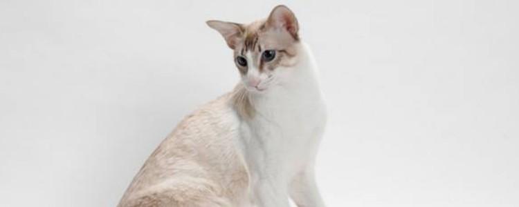 猫吃鸡蛋黄的作用 鸡蛋黄适量吃可以的,但不适用所有猫咪-轻博客