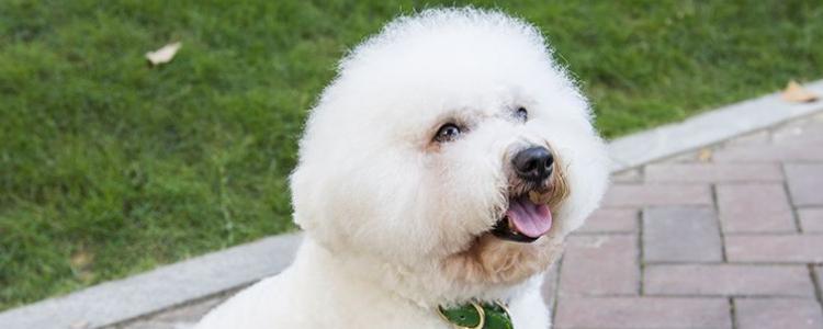 狗狗得了狗瘟能治好吗? 治好需要多少钱?