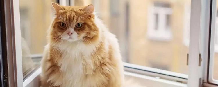 猫怀孕多少个月 谨防早产和难产!