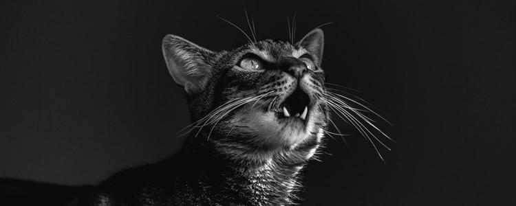 公猫多少个月可以做绝育 事关猫生千万别草率!
