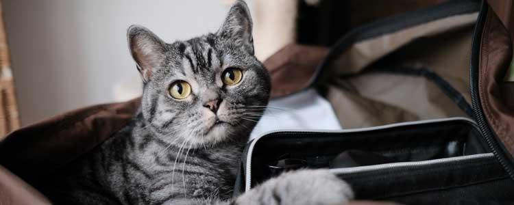 小猫耳朵里有油怎么回事 注意预防耳螨!