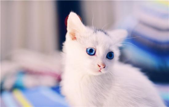 猫有几颗牙 猫的牙齿你了解吗?猫有几颗牙