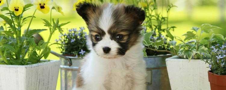 被家里的狗狗咬破皮了怎么办 需要注射狂犬疫苗吗