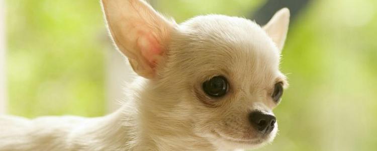 怎么照顾新生狗狗 新生狗狗的生命非常脆弱!