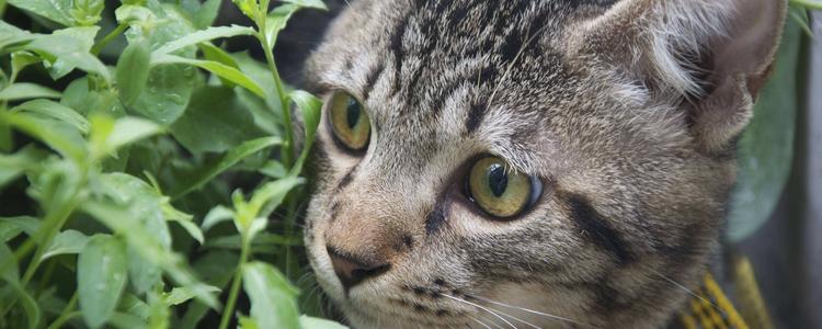 中国狸花猫多少钱一只 这只猫价钱非常划算了