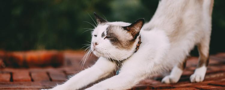 猫后背一抽一抽的 你有多久没为它驱虫了?