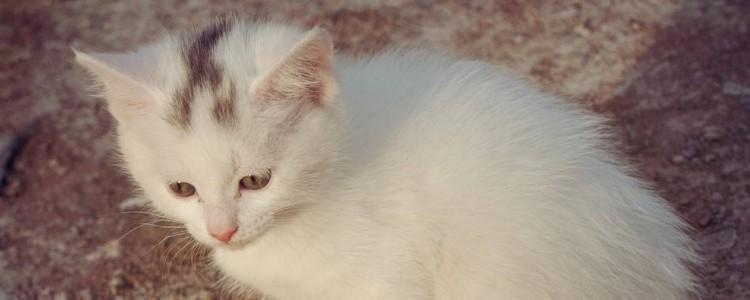 晚上猫咪眼睛发亮怎么回事 身体结构真的有所不同!