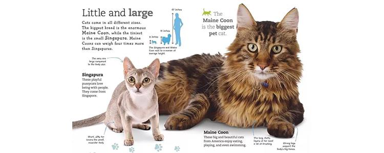 """体型最小的猫 你听说过""""阴沟猫""""吗?"""