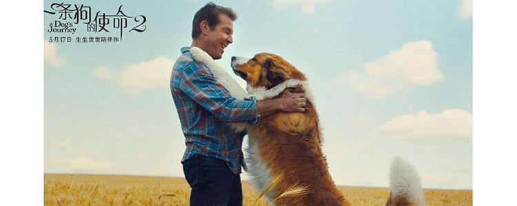一条狗的使命2的贝利是什么品种狗 你是不是也以为是金毛?-轻博客