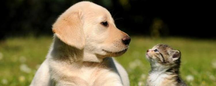 主人遇到危险时猫和狗 你的猫狗有保护你吗?