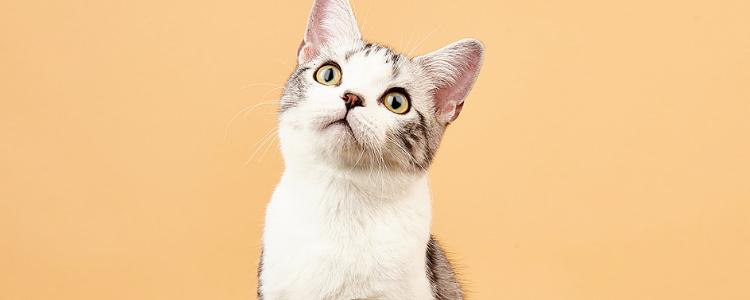 猫能带出去溜吗 做好这些猫主子也能带出门!插图(1)