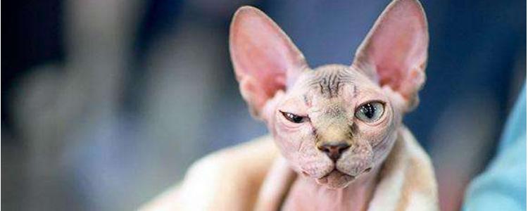 猫智商排名前十 你的猫咪上榜了吗?