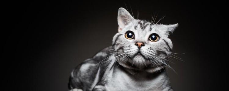 猫咪智商排行榜前十名 你家的猫咪进前十了吗?