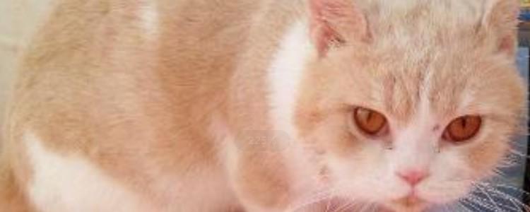 老年猫的疾病 这都是很常见的疾病问题!