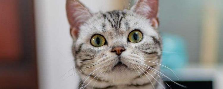 猫绝育多少钱 上门绝育靠谱吗?