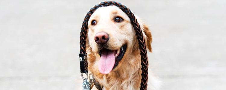 狗狗浑身哆嗦怎么回事 天冷要多注意狗狗温度哦!