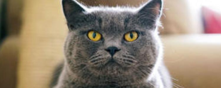 猫应该绝育吗 猫不绝育会有什么风险,你知道吗