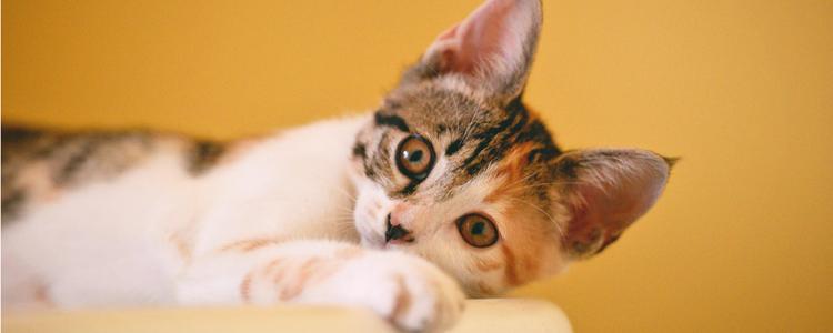 幼猫喜爱咬人怎么办 不痛也千万不能惯!插图(1)