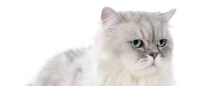 猫咪化毛膏有必要吗 身体有毛球就非常有必要!