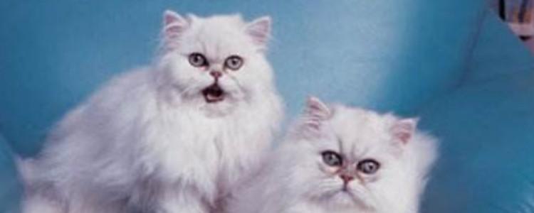 猫咪有偿领养什么意思 就是你要给点钱才行啊!
