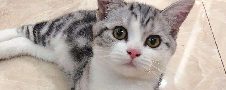 猫有多少牙齿 你知道吗?