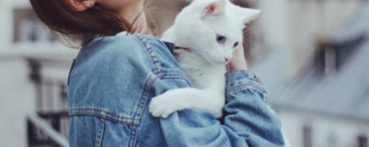 布偶猫一窝能生几只 要注意哪些事项