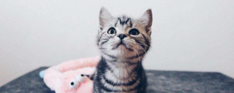 猫急性肠胃炎会致死吗 脱水会直接导致猫咪死亡的!