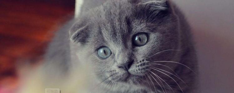 猫来月经会流血吗 猫是不会有月经现象的!