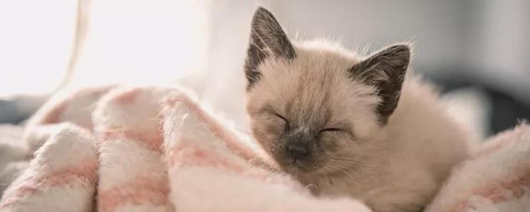 暹罗猫黑了能白回来吗 暹罗猫为什么到了冬天就变黑?